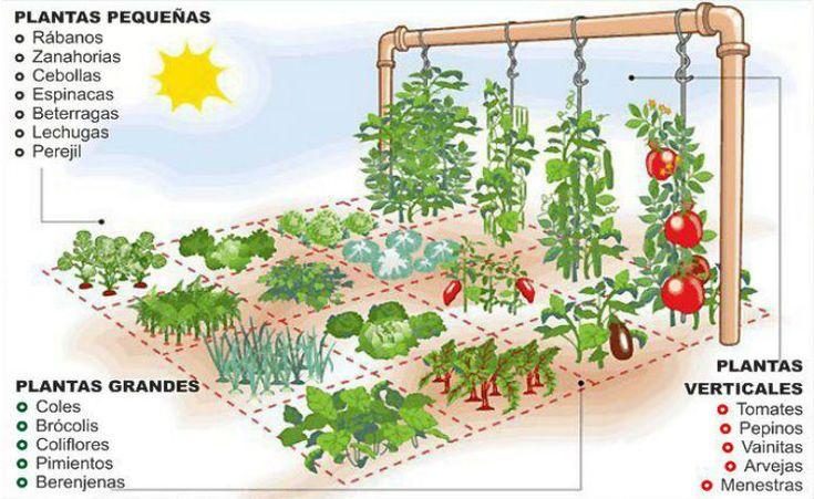 Faça uma horta de legumes e ervas usando 1 m² do quintal da sua casa