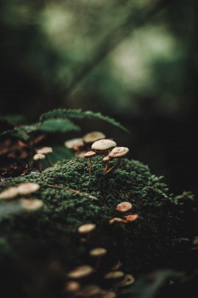 Mushrooms Bokeh Forest Photography Ormanlar Resimler Fotograf