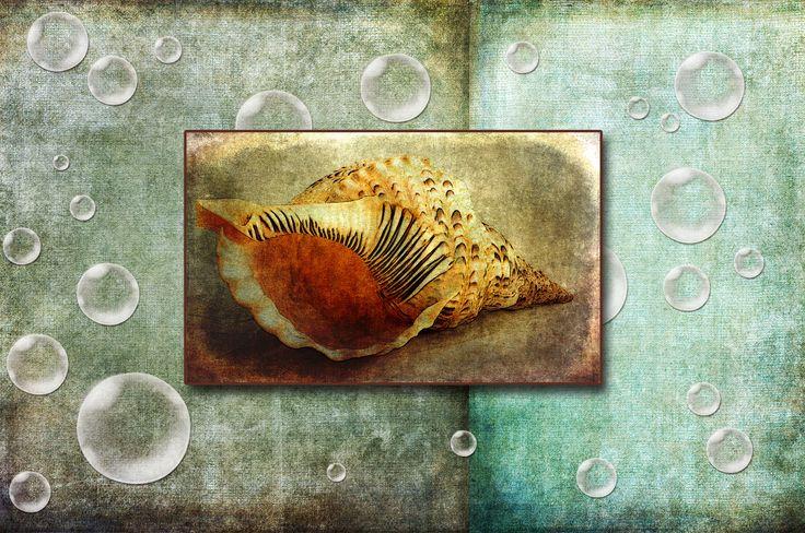 Seashell Dream - Konkyliedrøm  #bobler #skjell #konkylie #fotokunst #bilder #teksturer #photoshop #modernekunst