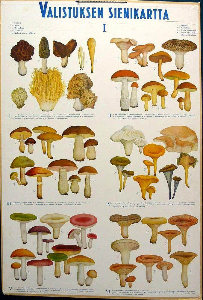 Opetustaulu, Valistuksen sienikartta I