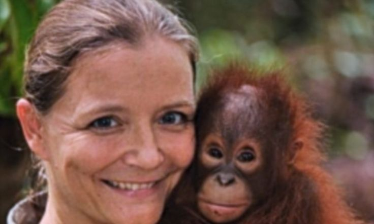 Operation Orangutang! One woman's desperate mission to save the much-loved species from extinction is revealed in a heartwarming new documentary To support Lone's efforts directly, please support Save the Orangutan UK www.savetheorangutan.com or Orangutan Land Trust www.forests4orangutans.org. Both are partners with the Borneo Orangutan Survival Foundation in Indonesia.