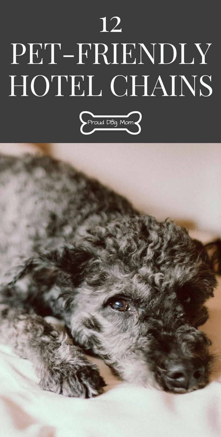 12 Pet-Friendly Hotel Chains | Dog Travel Tips |