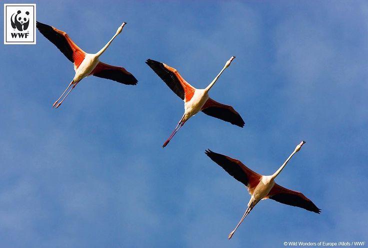 Bonne journée mondiale des oiseaux migrateurs ! #LoveNature #WWF