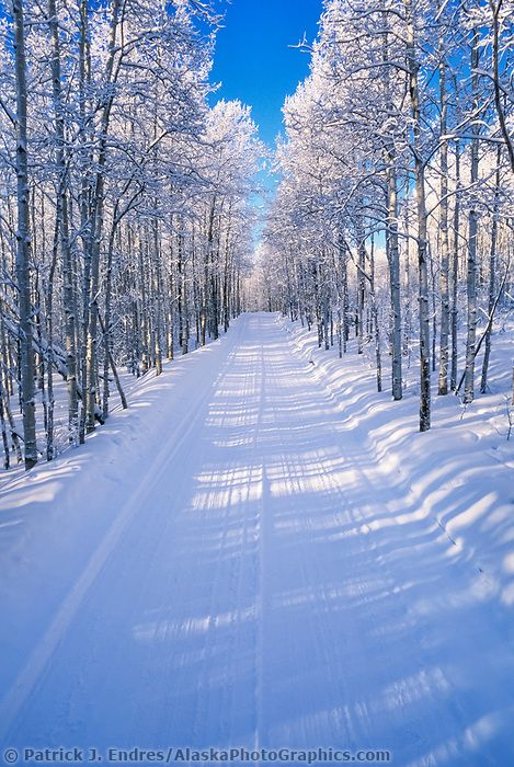 Snow covered trees along a winter roadway in Fairbanks, Alaska