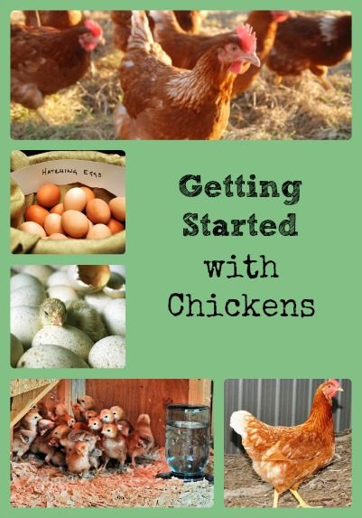 Getting Started with Chickens = via Better Hens and Gardens