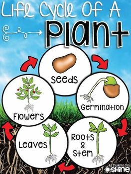 SO many ideas for a plant unit! I can't wait for spring :)