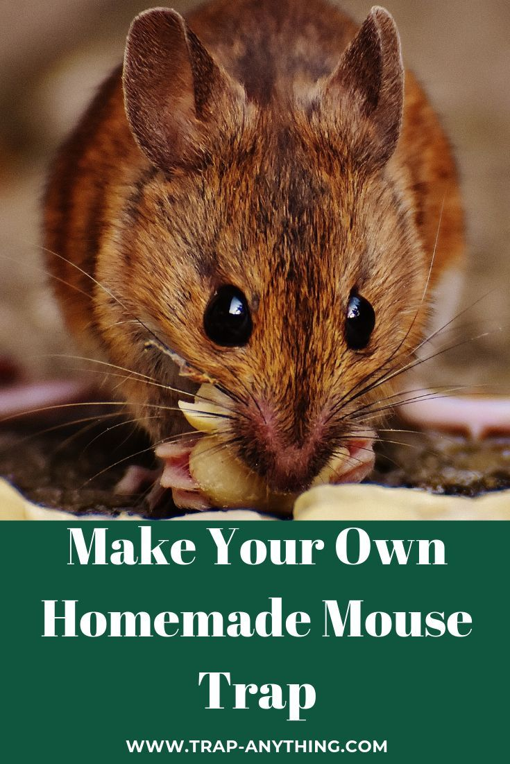 Homemade Mouse Trap Humane Bucket Trap Homemade Mouse Traps