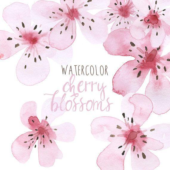 Watercolor Cherry Blossoms Clip Art, Clip Art Cherry Blossom, Sakura Clipart, Cherry Blossom Illustrations, Japanese flower clipart, Floral