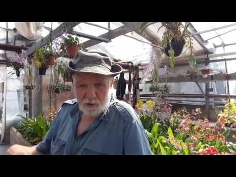Perché le orchidee non fioriscono? - YouTube