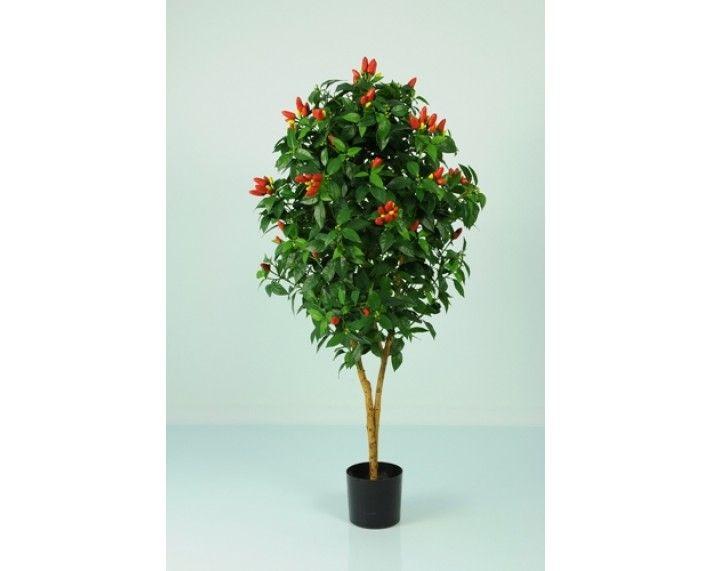 Pepper Tree 3ft - Trees