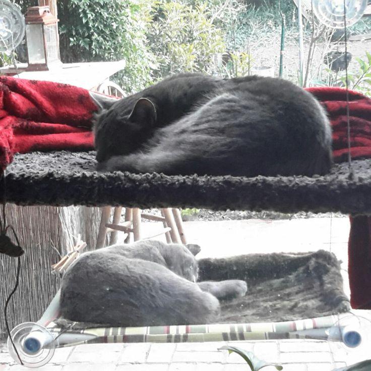 House Cats Perch Crossword