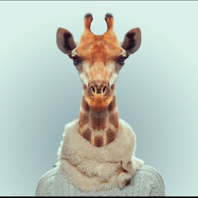 Hilarious Zoo Portraits by Yago Partal