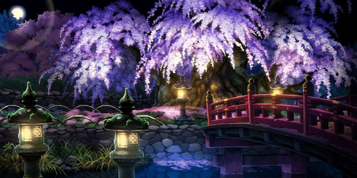 Cherry trees at evening
