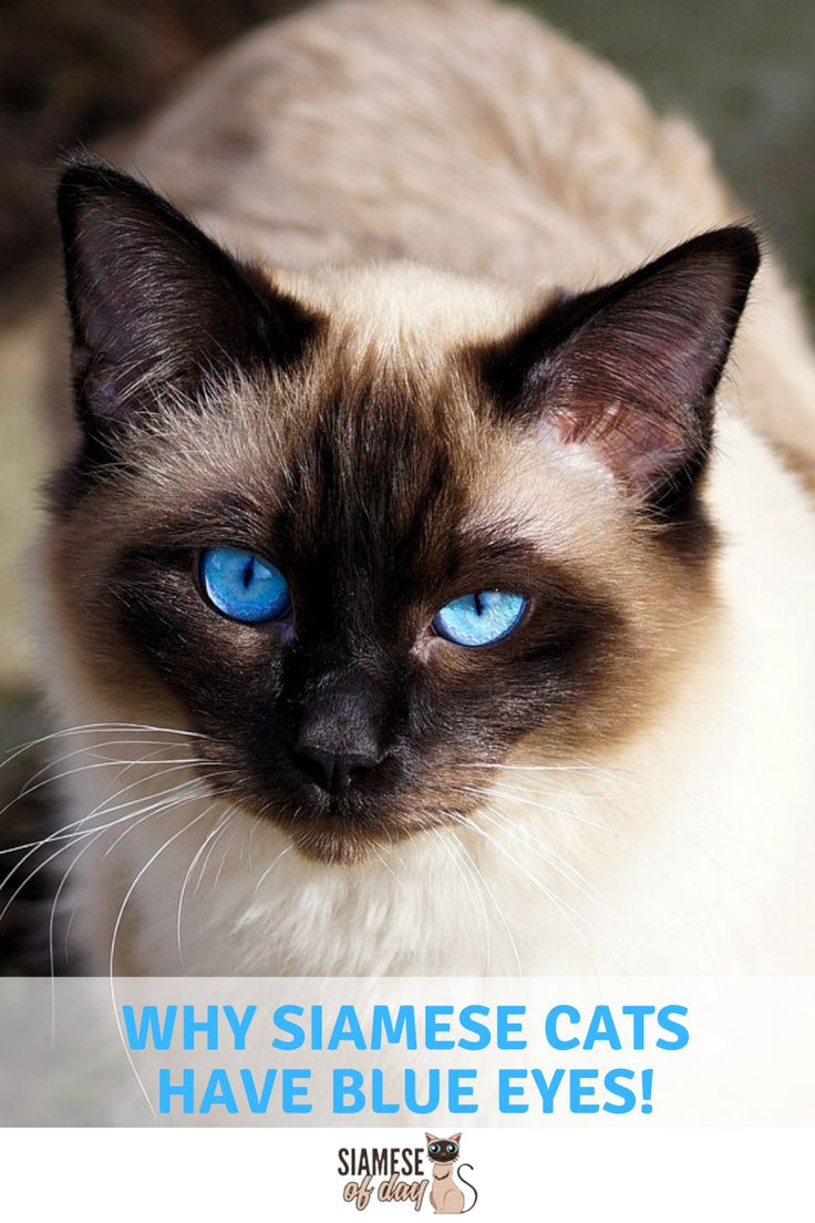 White Cats With Blue Eyes Names