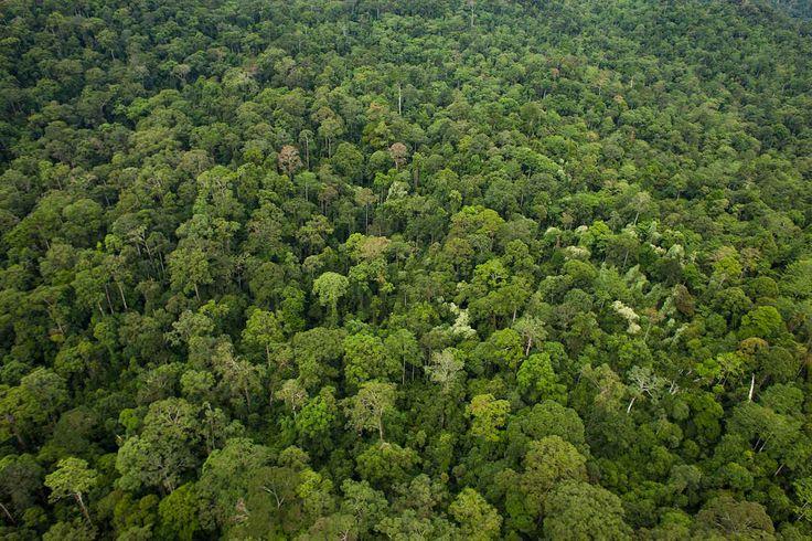 Danum Valley Conservation Area, Sabah, Borneo, Malaysia.