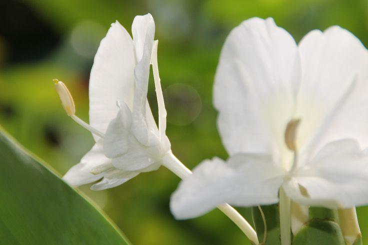 in de tuin van HomeStay Srilanka