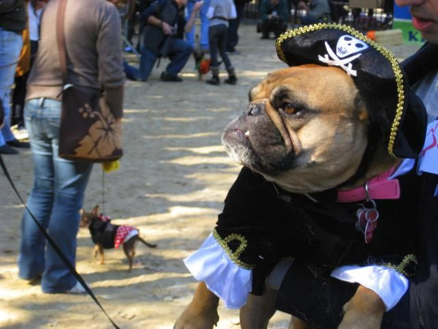 Top 6 NYC Halloween Costume Shops: New York Costumes