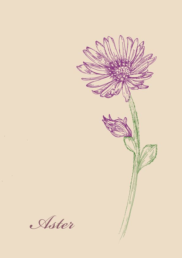 Wild flowers illustration Project ASTER by JUNG SOO CHAE, via Behance