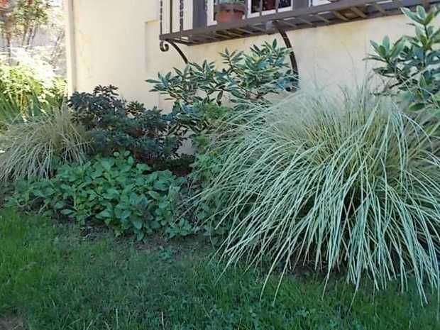 17 best images about gardening on pinterest trees and for Ornamental grass border design