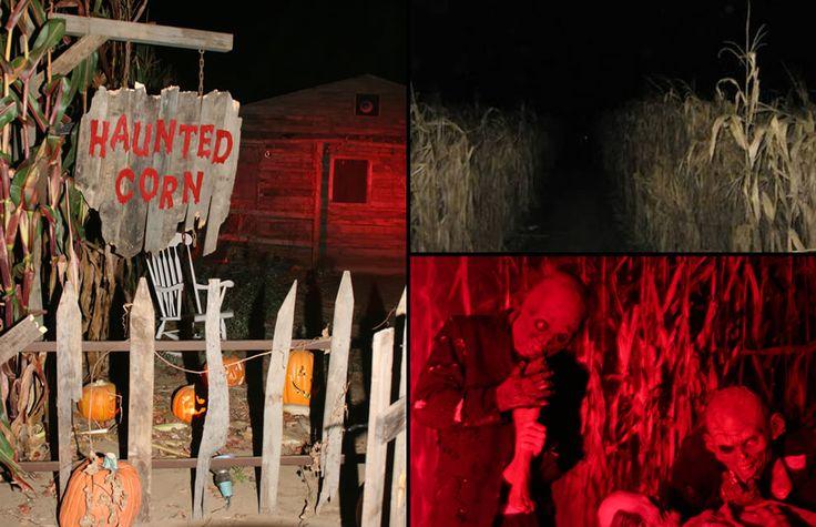 Haunted Corn Maze | Very dark corridors of a haunted corn maze where hungry zombies jumped ...