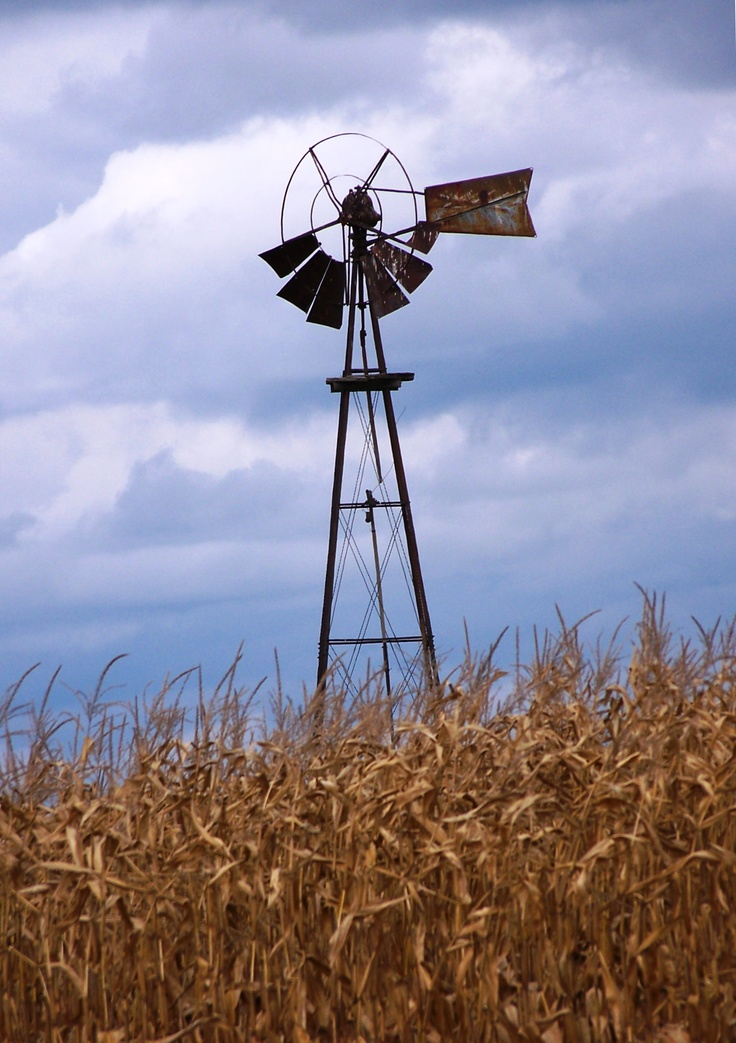 Windmill in Cornfield,  Photo: Richard E,   t: 416.630.3679,    ON, Canada