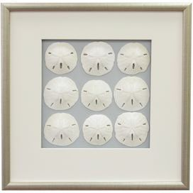 """Framed sand dollar wall decor.Product: Framed wall artConstruction Material: Wood, matte, glass and sea lifeColor: Burnished silver frameDimensions: 17.5"""" H x 17.5"""" WCleaning and Care: Wipe with dry cloth"""