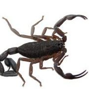 How to Repel Scorpions | eHow