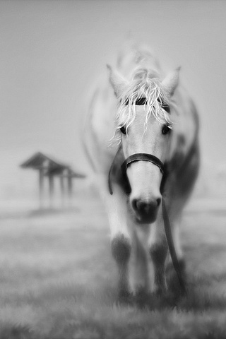 13 best Horse wallpapers for iphone images on Pinterest ...