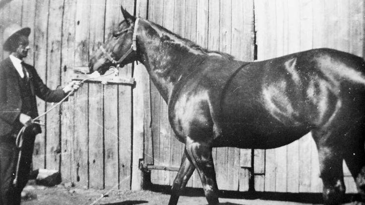 POSINATUS 1913