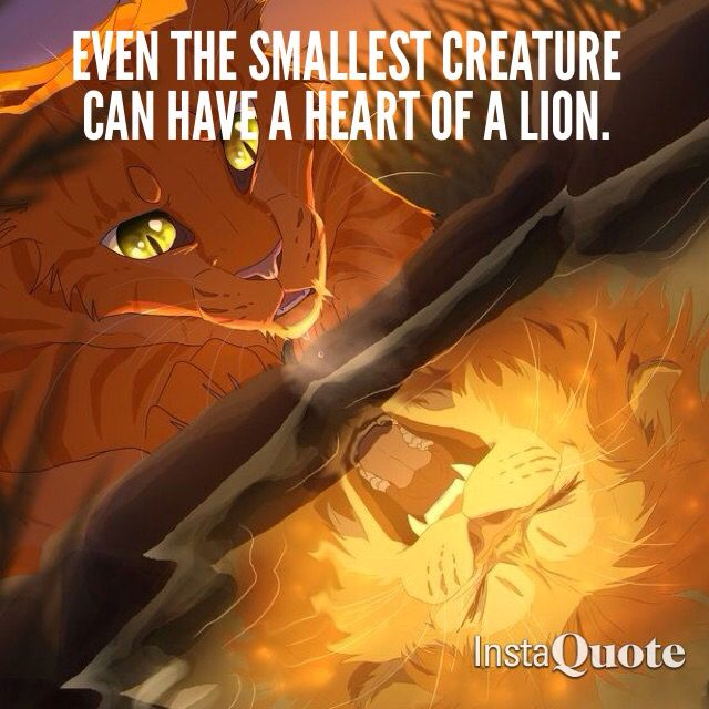 Warriors Book Series Movie: 62 Best Images About Warrior Cat Quotes On Pinterest