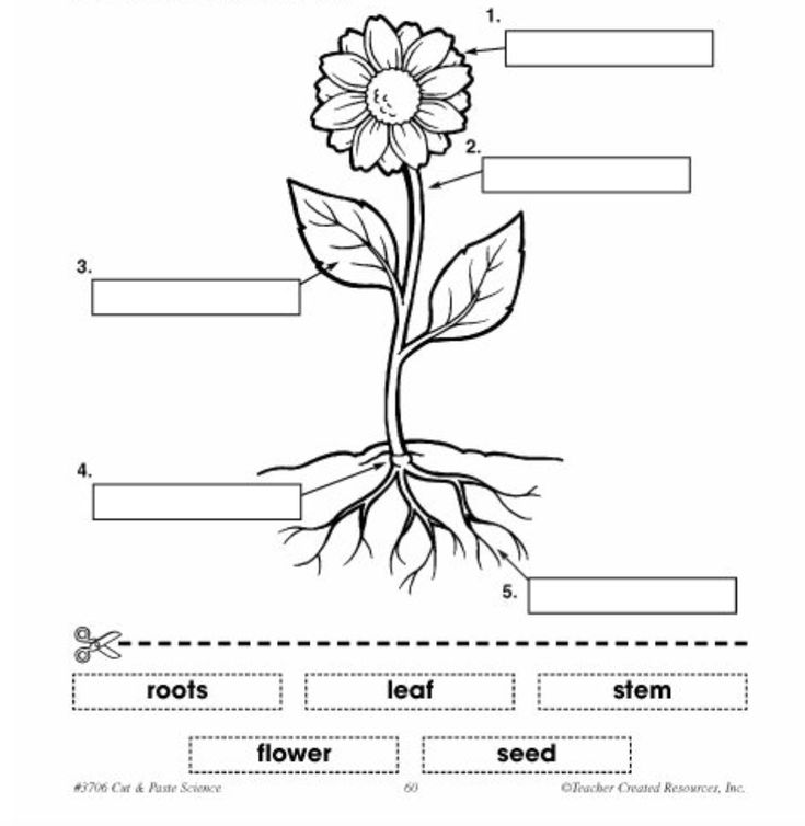 parts of a plant diagram label - Yahoo Search Results ...