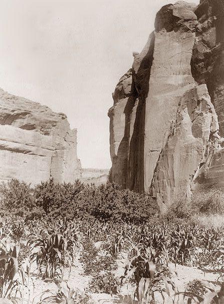 Navajo Farm: America Indian, Navaho Dinning, Native American Navajo, Indian Navaho, Navajo Farms Blood, American Indian, Native Americans Photos, Indian Dinning, 1St People