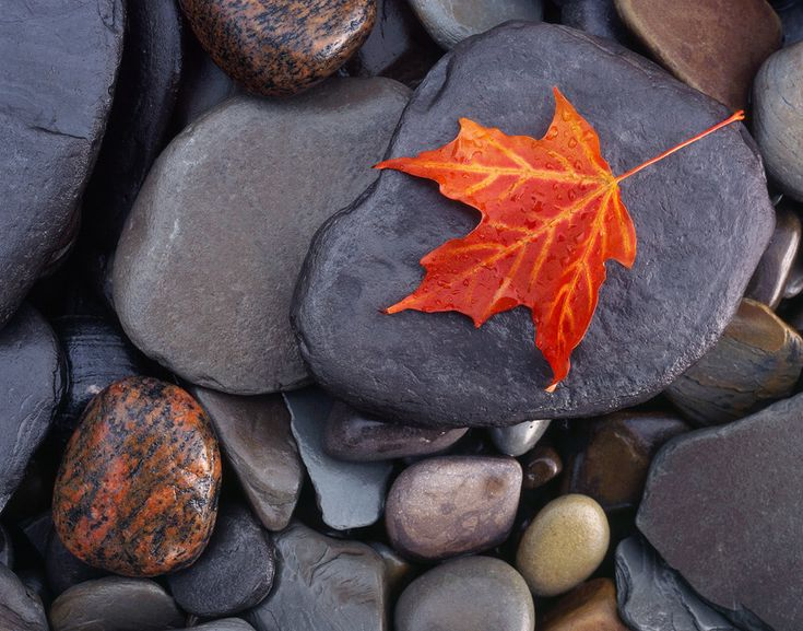 """Autumn on the Rocks"" - A lone maple leaf on the wet multicolored stones of the Lake Erie shore.  My favorite from my trip out east.  Prints Available."