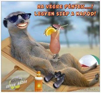 vicces állatos képek - Google keresés