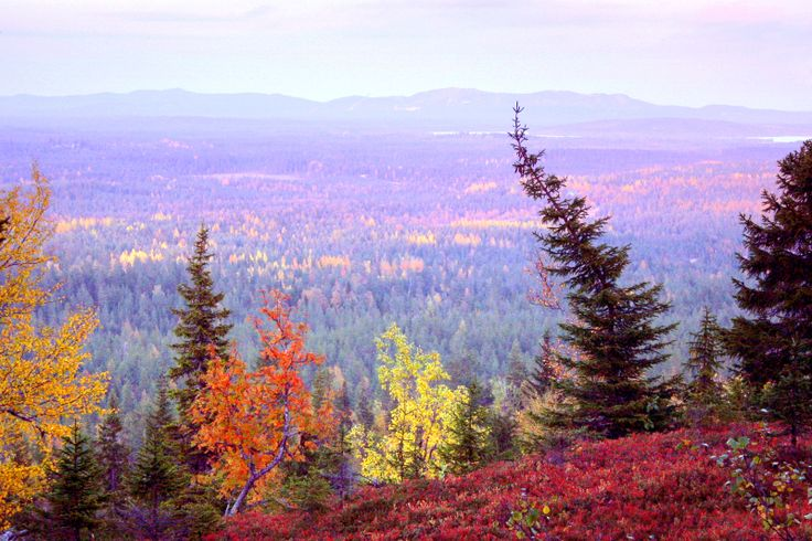 Autumn colours on Kouervaara Hill, Kuusamo, Lapland, Finland.