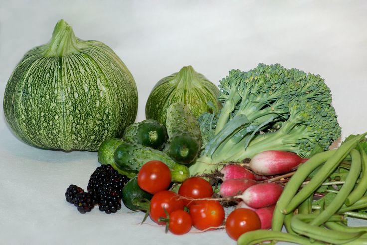 Courgettes, haricots, radis, tomate ... : les incontournables pour debuter