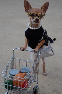 Vamos as compras?! Aproveite os lançamentos da coleção de 2015 nas Óticas Wanny! #oculos #sol #grau #sunglasses #eyewear #eyeglasses #shop #online #pet #dog #love #cute #funny #oticas #wanny
