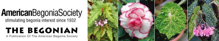 American Begonia Society - Storing Tuberous Begonias for the Winter