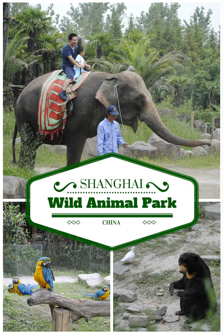 Planning a visit to Shanghai, China? Here're some tips, if you want to visit Shanghai Wild Animal Park.