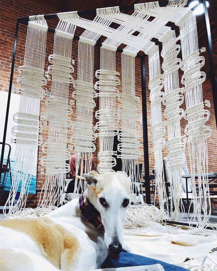 770 отметок «Нравится», 27 комментариев — Windy Chien (@windychien) в Instagram: «@shelleyduvallgreyhound is not having it at this install, she is b-o-r-e-d... »