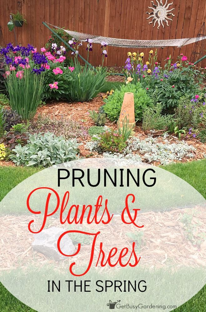 Haha, I am totally one of those people that thinks I need to know exactly how to prune every single type of plant and tree in my yard before I go near any garden pruning shears!!!! Pruning sounds like a huge scary thing!  This post makes it super easy to figure out the best time for pruning your plants and trees. I'm going to get out in the garden and start pruning this weekend! (AD)