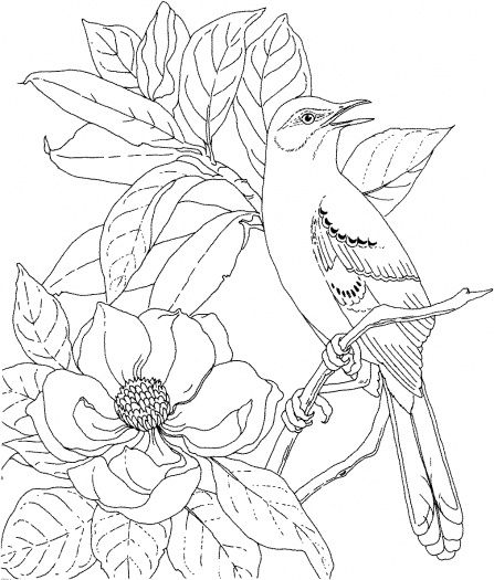 mockingbird and magnolia mississippi state bird and flower coloring page from magnolias category select from 21274 printable crafts of cartoons nature - Printable Coloring Pages Birds