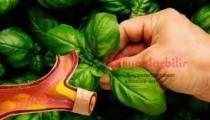 Güçlü Antioksidan Özelliği ile kanseri önler damarları açar