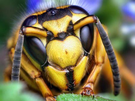 Los insectos, a diferencia de nosotros, poseen varios receptores que conforman una imagen. Lo que constituye las imágenes percibidas por los insectos son pequeños fragmentos que unidos dan forma a lo visto, tal como ocurre en una imagen digital.