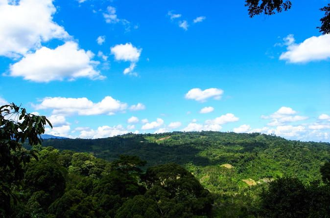 Kinabalu Park Canopy Walkway and Poring Hot Springs Full-Day Tour from Kota Kinabalu 2018 ca £60