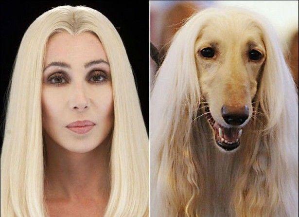 #19. American Singer Cher Looks Alike