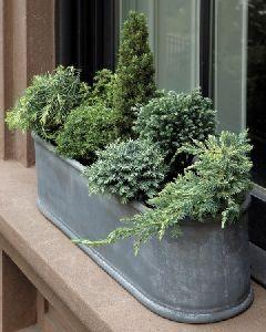 Nadelnäumchen sorgen im Winter für viel Grün. #pflanzenfreude #nadelbäume…