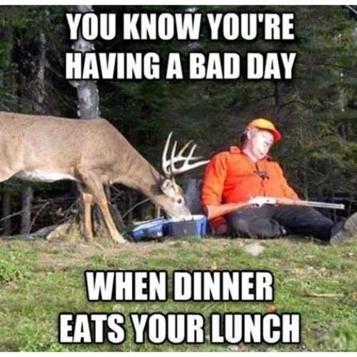 cbfa56c844114c5ec91ebb622a8b0f2e hunting memes deer hunting quotes best 20 funny hunting quotes ideas on pinterest deer hunting,Funny Deer Memes