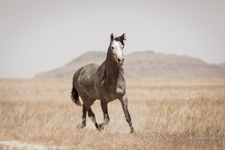 Comments Due by Tuesday, October 31st. The Bureau of Land Management (BLM) Salt Lake City Field Office is seeking public comment on a Scoping Notice for a roundup and removal of wild horses...
