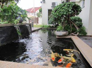 Koi Pond Design 2
